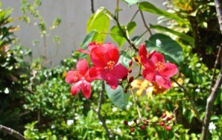 v5-2flowers-l-300×201