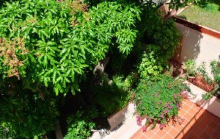 v6-terrace-lanscape-300×201