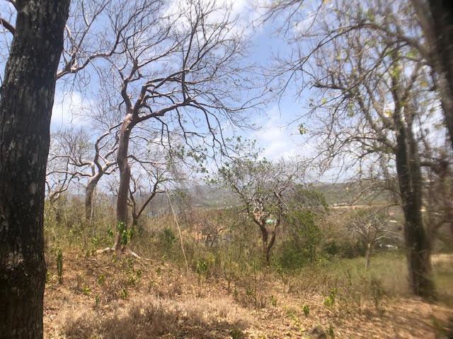 Gomier Trees