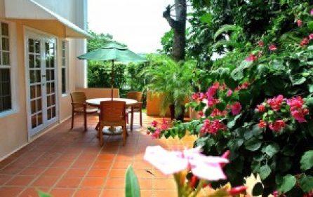 v6-terrace-boganvilla-bloom-l-300×201